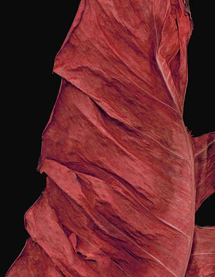 Designers Choice Photograph - Red Glory by Miguelito Iglesias