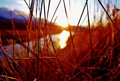 Photograph - Red Grass by Sarah Pemberton