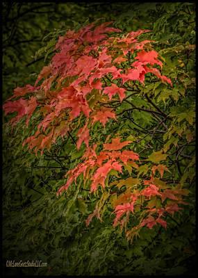 Photograph - Red Green Leaves In Fall by LeeAnn McLaneGoetz McLaneGoetzStudioLLCcom