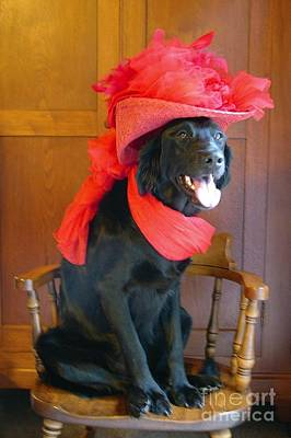 Red Hat Society Photograph - Red Hat Society Labradoodle by Deb Schense