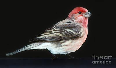 Red Head Original
