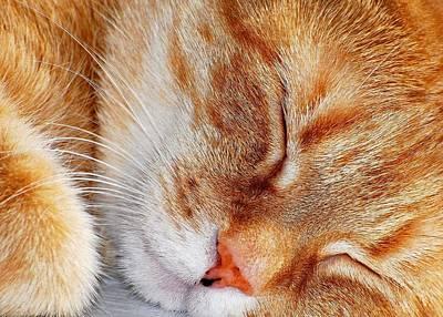 Orange Tabby Photograph - Irish Eyes Are Sleeping by Diana Angstadt