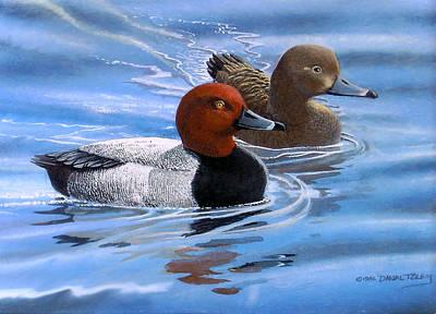 Red Headed Ducks Art Print by Dan Terry