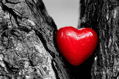 Calm Photograph - Red Heart In A Tree Trunk by Michal Bednarek