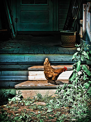 Photograph - Red Hen by Colleen Kammerer