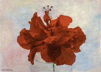 Photograph - Red Hibiscus by Fran Gallogly