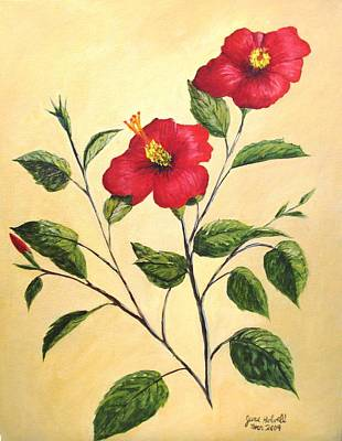 Red Hibiscus Art Print by June Holwell