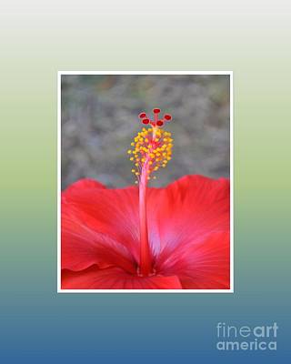 Photograph - Red Hibiscus-v3 by Darla Wood