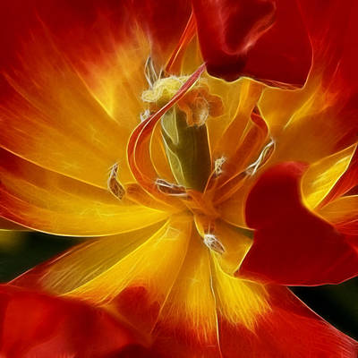 Photograph - Red Hot Tulip by Wes and Dotty Weber