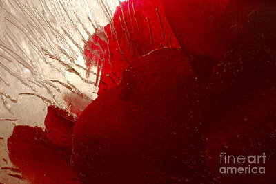Photograph - Red Ice by Randi Grace Nilsberg