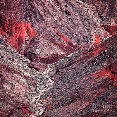 Photograph - Red In The Canyon by John Rizzuto