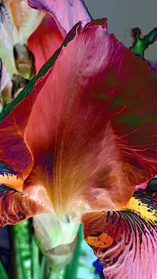Photograph - Red Iris by Davina Nicholas