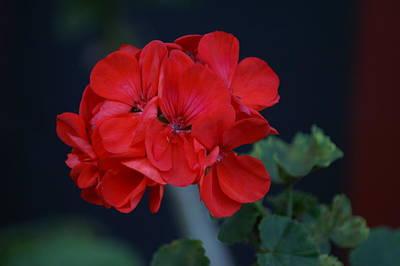 Red Is My Blossom Art Print by Thomas D McManus