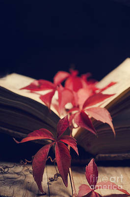 Photograph - Red Ivy In The Book by Jelena Jovanovic