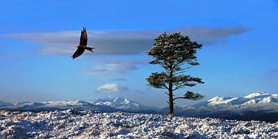 Photograph - Red Kite by Gavin Macrae