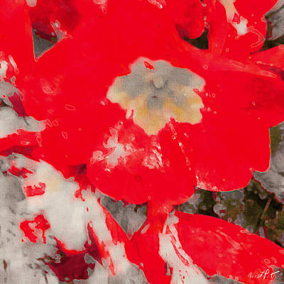 Abstract Flowers Wall Art - Photograph - Red Lacquered Primroses by Anna Porter