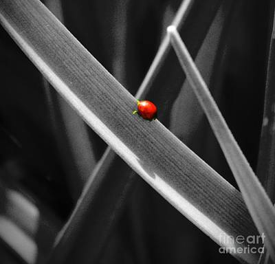 Mixed Media - Red Ladybird 2 by Chalet Roome-Rigdon