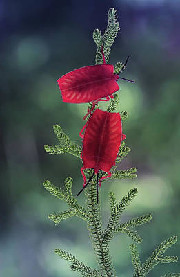 Ladybug Wall Art - Photograph - Red Ladybug by Abdul Gapur Dayak
