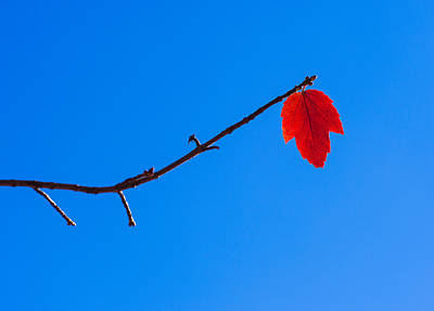 Photograph - Red Leaf - Arboretum - Madison by Steven Ralser