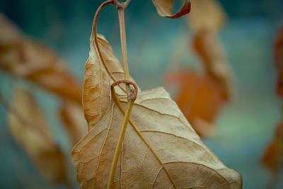 Photograph - Red Leaf Close-up by Vlad Baciu