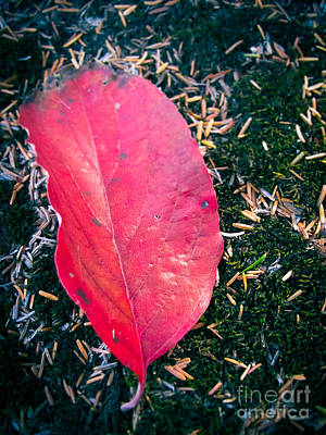 Pine Needles Photograph - Red Leaf by Colleen Kammerer