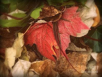 Photograph - Red Leaf - First Glimpse Of Autumn by Miriam Danar