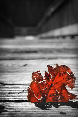 Photograph - Red Leaf On A Pier by Kelly Hazel