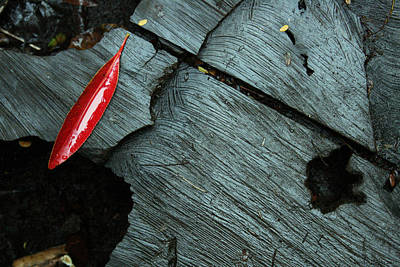 Photograph - Red Leaf On Cut Wood by Jennifer Bright