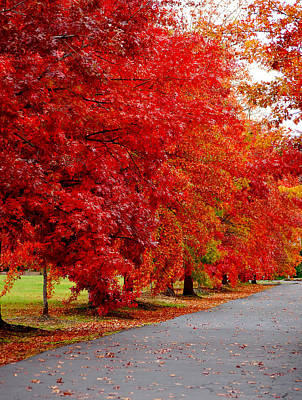 Photograph - Red Leaf Road by Holly Blunkall