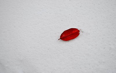 Red Leaf Snow Art Print