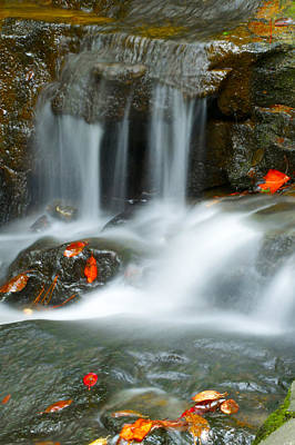 Photograph - Red Leafs In The Rapids by Shelby  Young