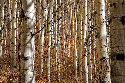 Keith Richards - Red Leafs Through the White Aspens by Mitch Johanson