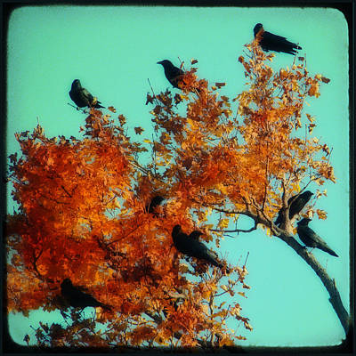 Starlings Digital Art - Red Leaves Among The Ravens by Gothicrow Images
