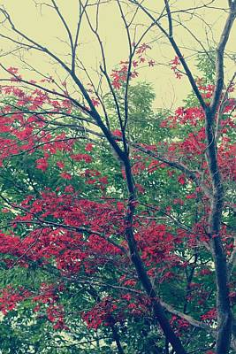 1-war Is Hell Royalty Free Images - Red Leaves and Branches Royalty-Free Image by The Art Of Marilyn Ridoutt-Greene