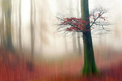 Denmark Photograph - Red Leaves And The Hidden Path. by Leif L?ndal
