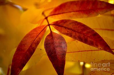 Red Leaves At Dawn Art Print by Deb Halloran