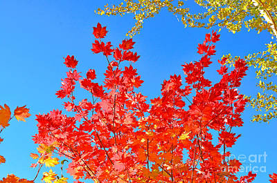 Art Print featuring the photograph Red Leaves by David Lawson