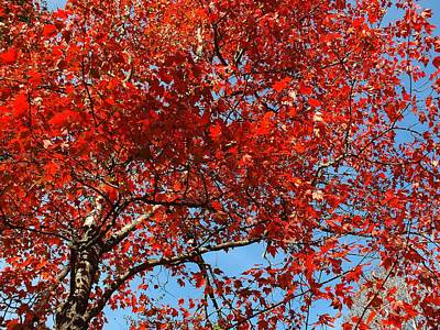 Photograph - Red Leaves by Gene Cyr