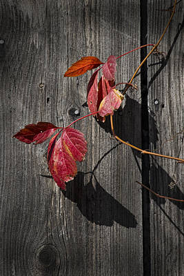 Amy Weiss - Red Leaves in Autumn by Randall Nyhof