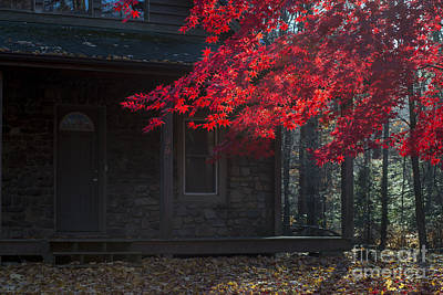 Photograph - Red Leaves In Front Yard by Dan Friend