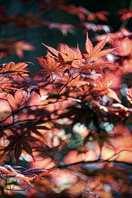 Photograph - Red Leaves In Spring by Brian Davis