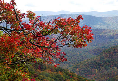 Photograph - Red Leaves In The Blueridge by Duane McCullough