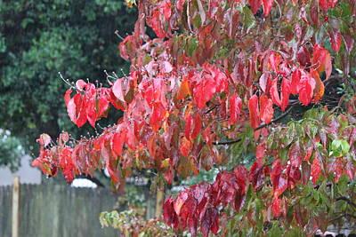 Red Leaves In The Rain Print by Carolyn Ricks