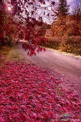 Photograph - Red Leaves by Jean-Noel Nicolas