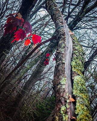 Photograph - Red Leaves by Karen Saunders