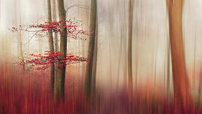 Denmark Photograph - Red Leaves. by Leif L?ndal