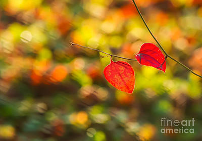 Outdoor Still Life Photograph - Red Leaves by Leyla Ismet
