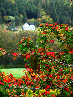 Photograph - Red Leaves Of Autumn by George Cousins