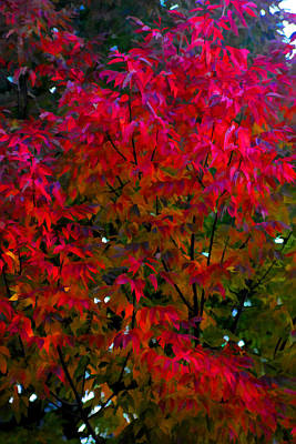 Photograph - Red Leaves Of Fall by Brian Davis