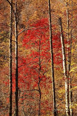 Red Leaves Art Print by Patrick Shupert